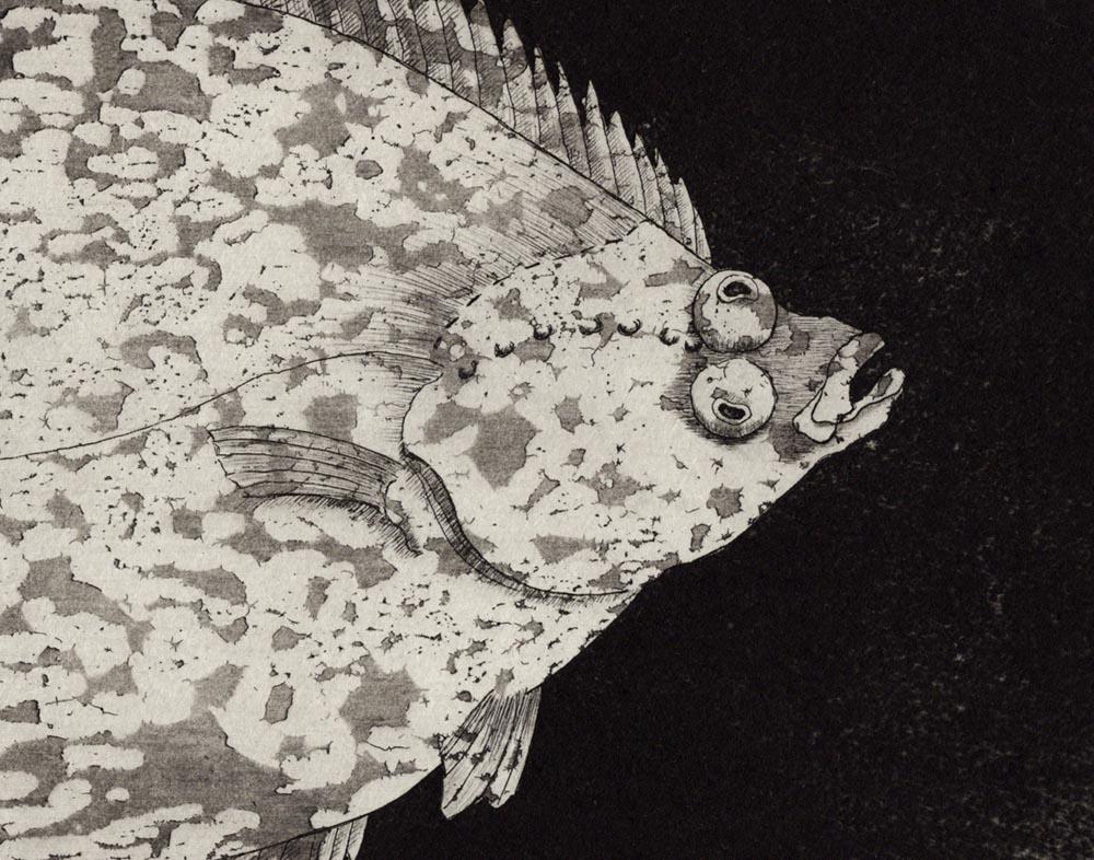 Radierung Plattfisch (Fisch unter Druck), Ausschnitt
