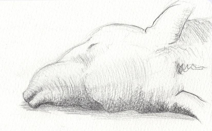Skizze – Tapir in Trance